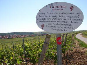 Unterfränkische Rebsorte Domina (Rotwein)